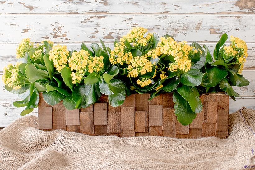 Wooden planter filled with yellow flowers