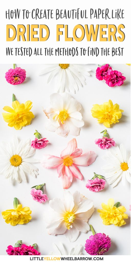 How To Dry Flowers Everything You Need To Know
