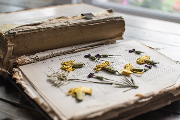 old book with yellow and pink pressed flowers