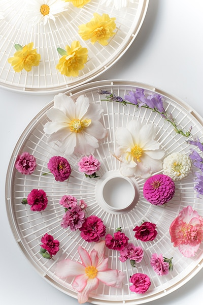Bright pink and yellow flowers on food dehydrator trays