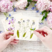 How to Dry Flowers - We Tested 5 Different Methods to Find the Best!
