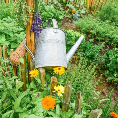 6 Helpful Flowers For The Vegetable Garden – Easy to Grow