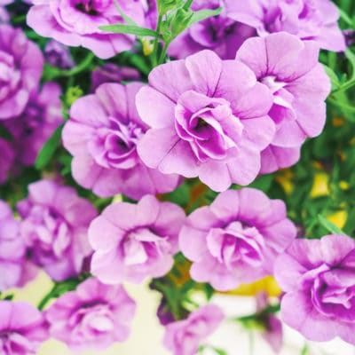 10 Easy Flowers To Grow From Seeds