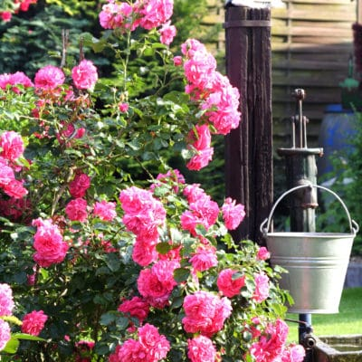 Best Smelling Flowers To Plant In Your Summer Garden