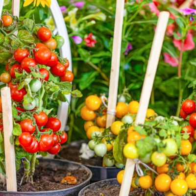 Vegetable Container Gardening: 15 Veggies to Grow in Pots