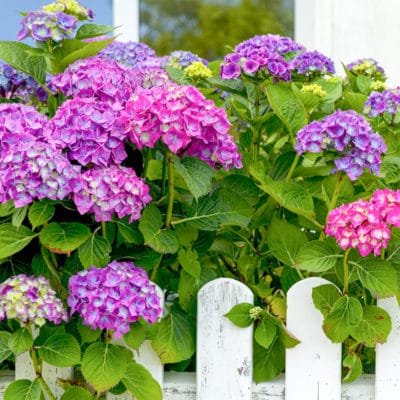 9 Best Flowering Shrubs to Plant for Great Curb Appeal Landscaping