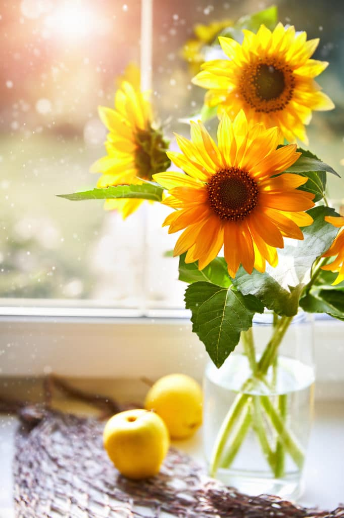 Bouquet sunflowers on sunny window Summery still life with apple windowsill.