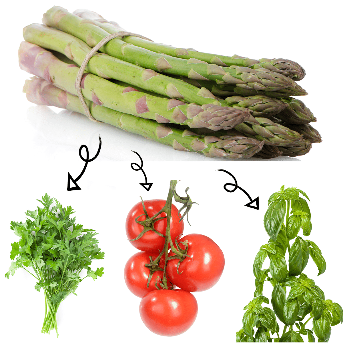 Bright white graphic of a bundle of asparagus with arrows linking it to a parsley sprig, fresh ripe tomatoes on the vine, and a basil plant.