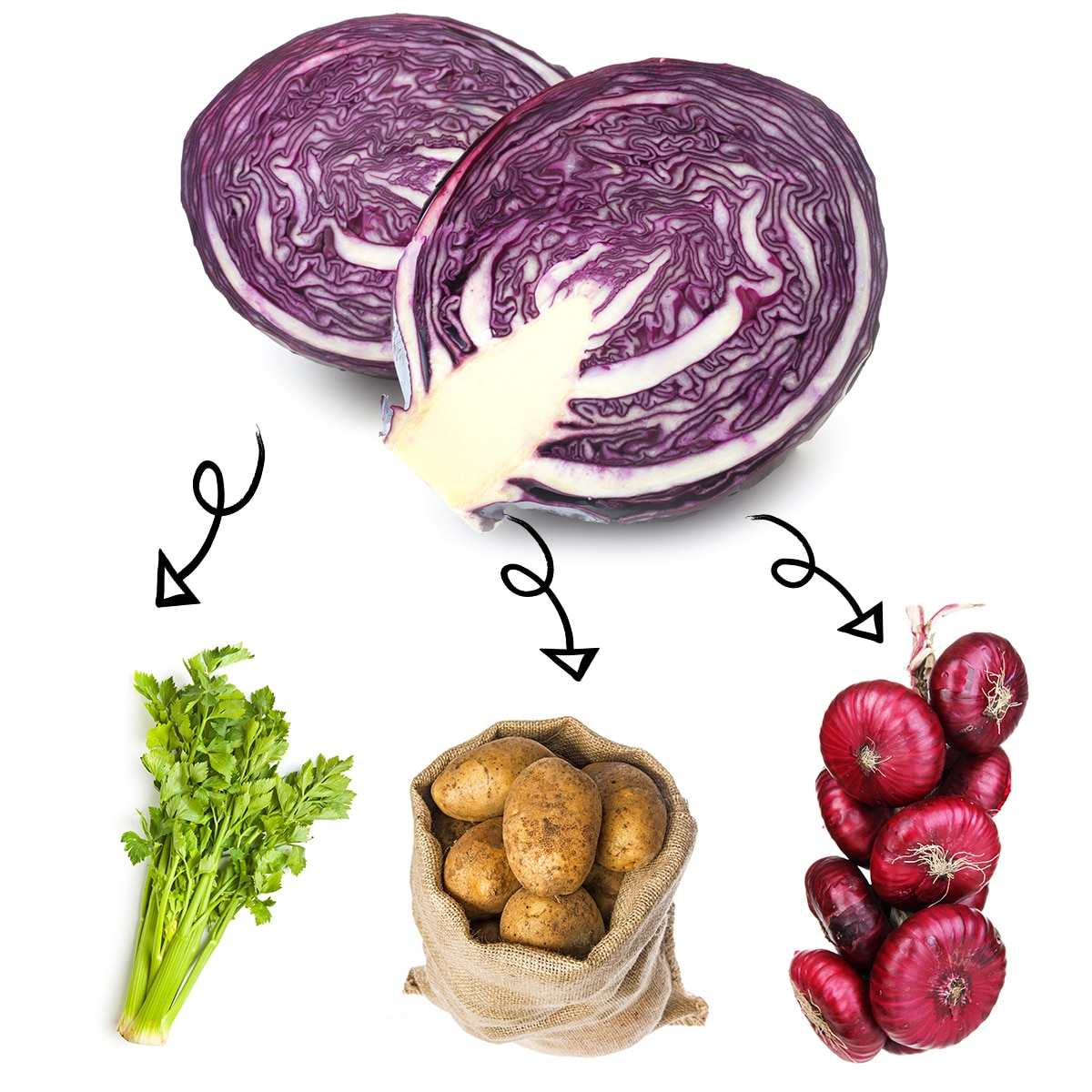 Bright white graphic of a sliced head of red cabbage with arrows linking it to a bundle of celery stalks, a sack of russet potatoes, and a bundle of red onions.