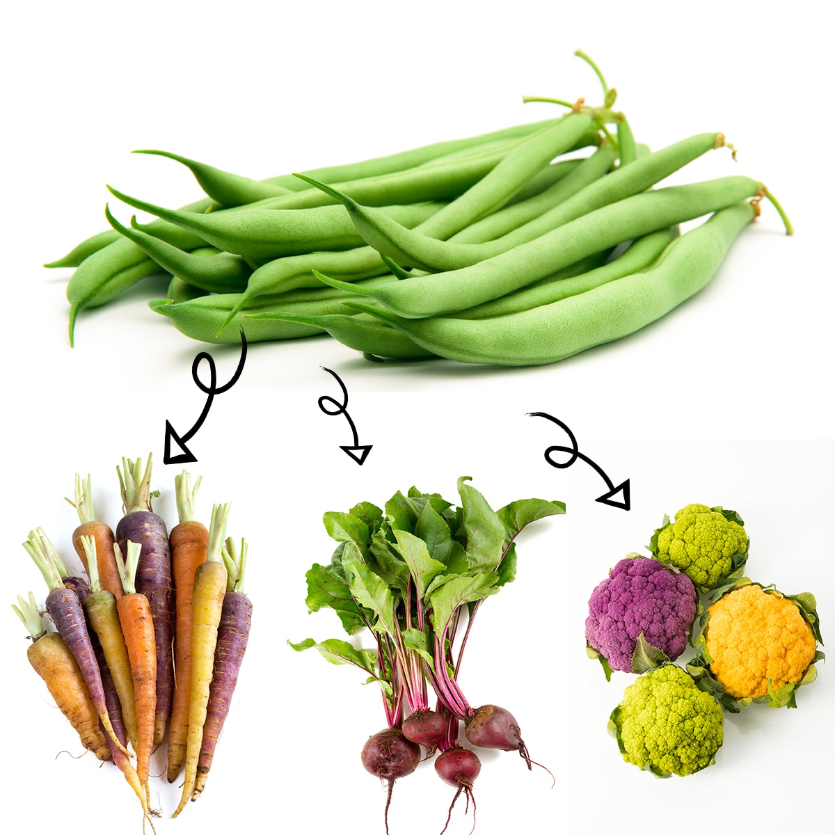 Bright white graphic of a fresh green beans with arrows linking it to colourful carrots, beets, and heads of cauliflower.