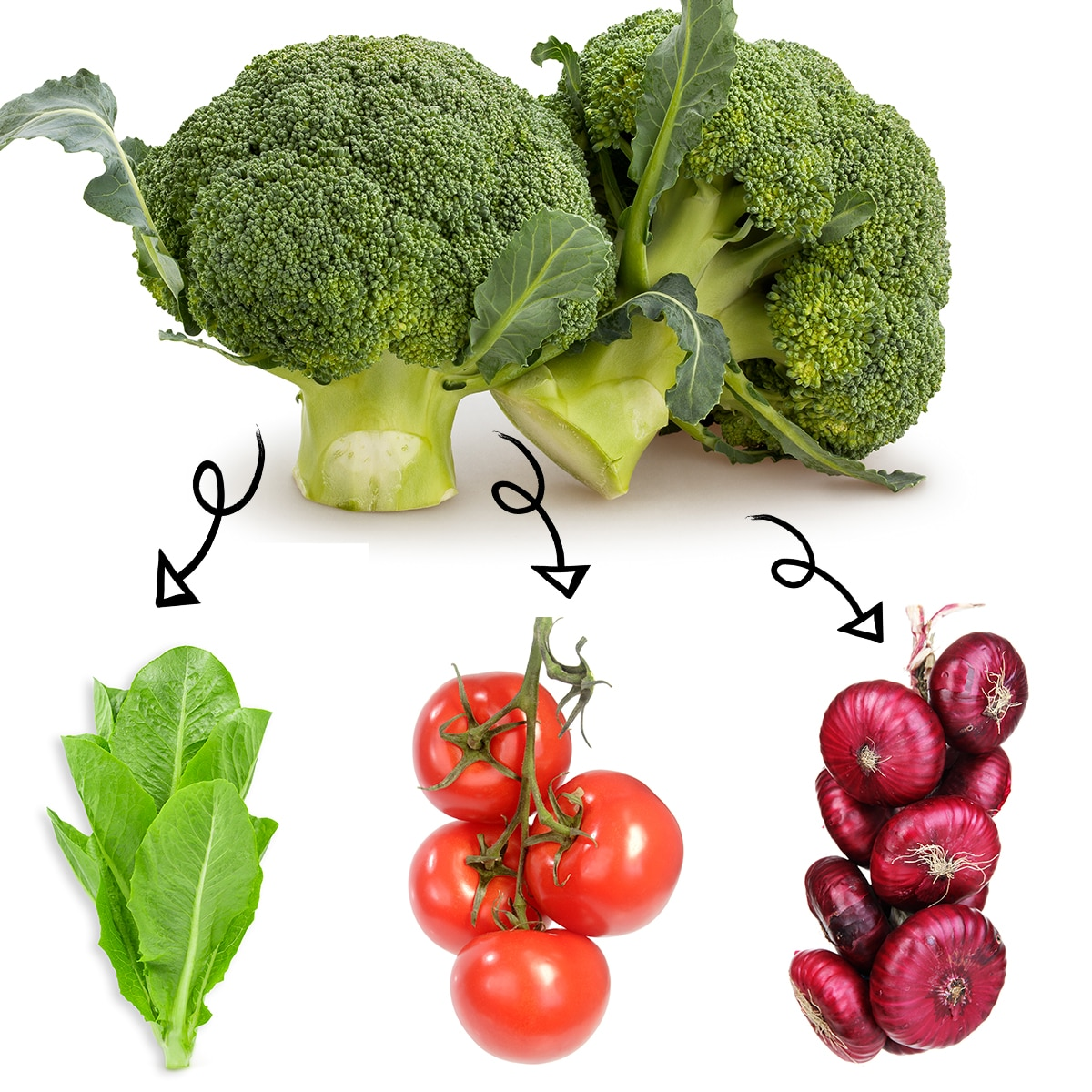 Bright white graphic of heads of broccoli with arrows linking it to lettuce leaves, fresh ripe tomatoes on the vine, and a bundle of red onions.