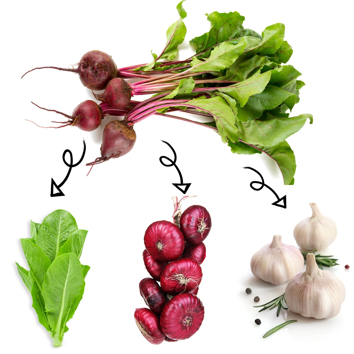 Bright white graphic of a bundle of beets with arrows linking it to a lettuce leaves, a bundle of red onions, and bulbs of garlic.