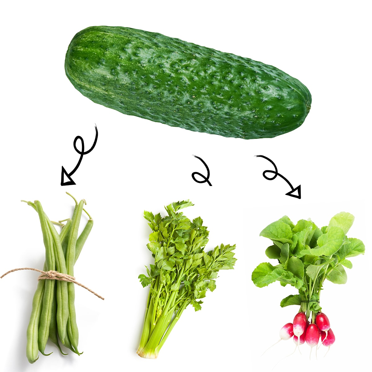 Bright white graphic of ripe cucumber with arrows linking it to a bundle of green beans, stalks of celery, and bright red radishes.