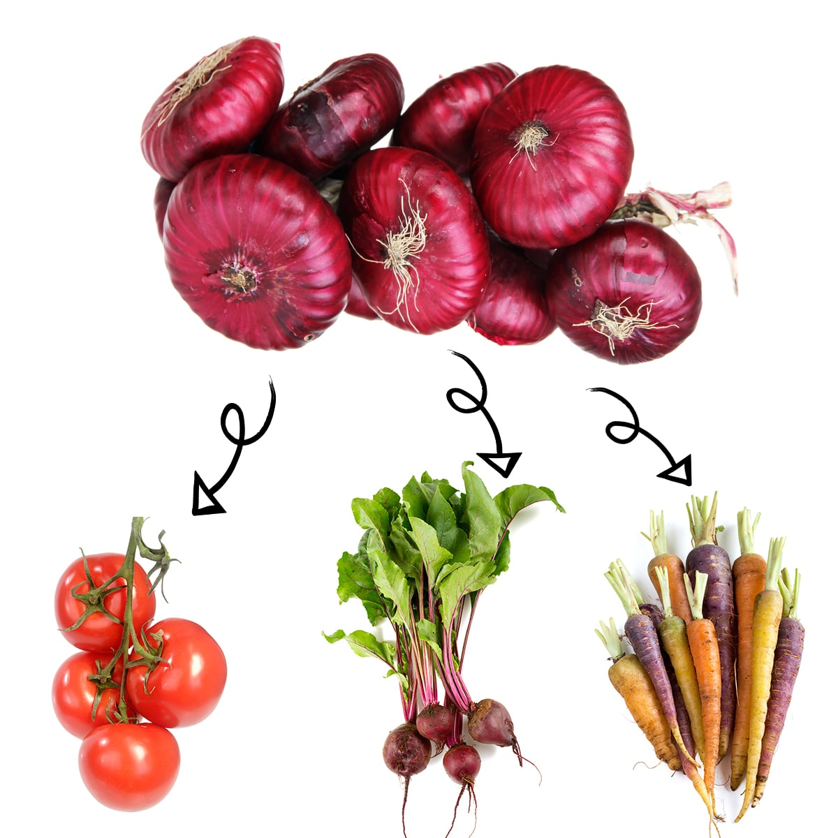 Bright white graphic of a bundle of red onions with arrows linking it to beets, fresh ripe tomatoes on the vine, and fresh carrots.