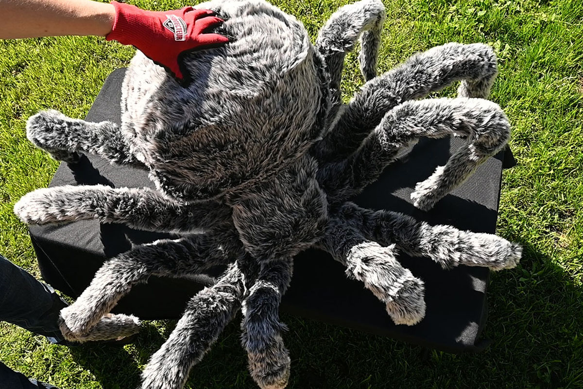 An image showing the spider fully covered in fur with the back end being attached to the spider.