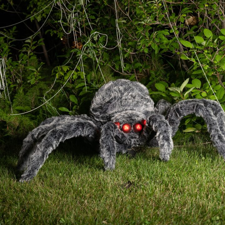 A Giant Spider For Halloween