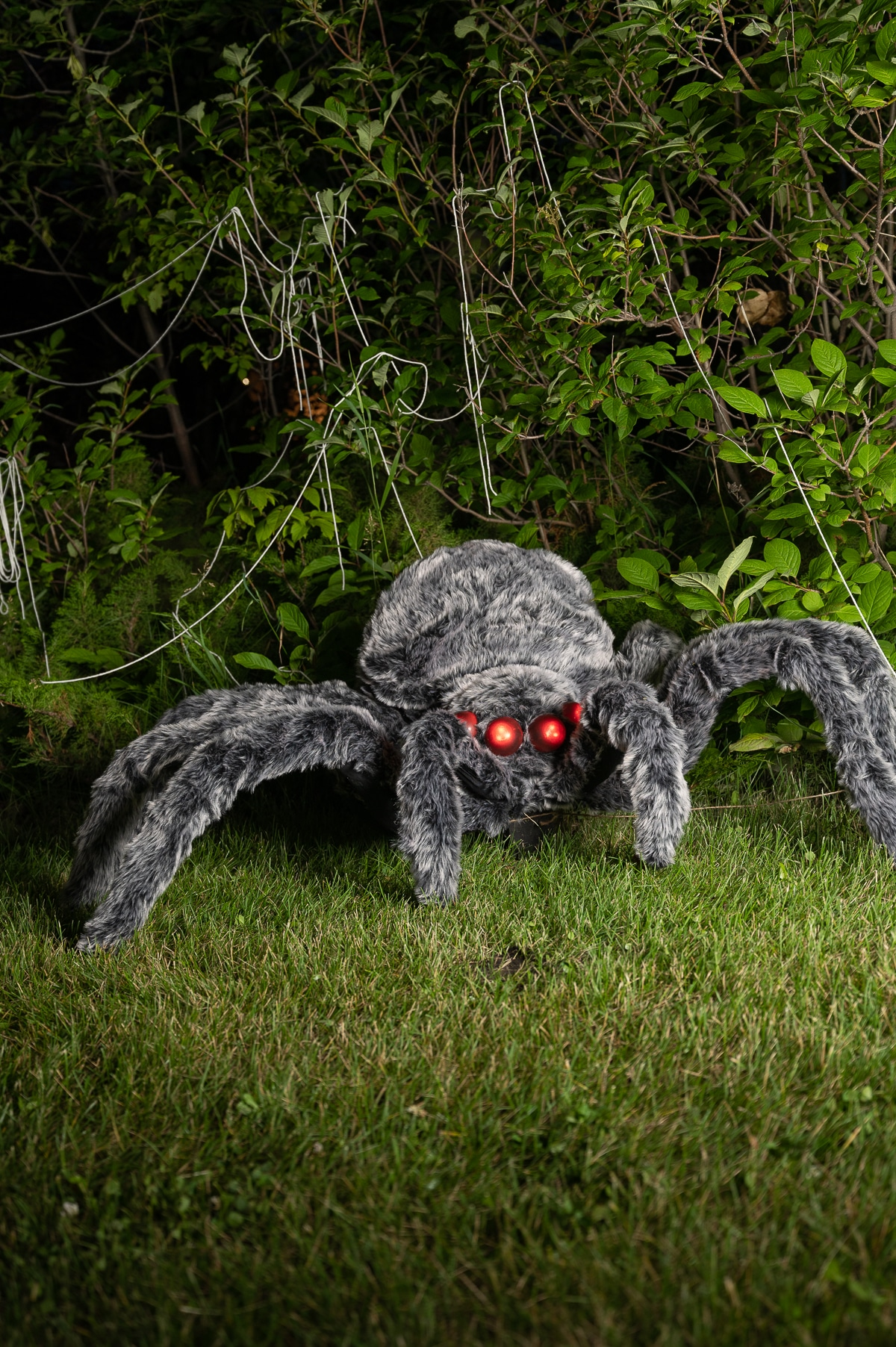 A giant grey furry Halloween spider with glowing eyes hanging out on the lawn with spider silks in the greenery