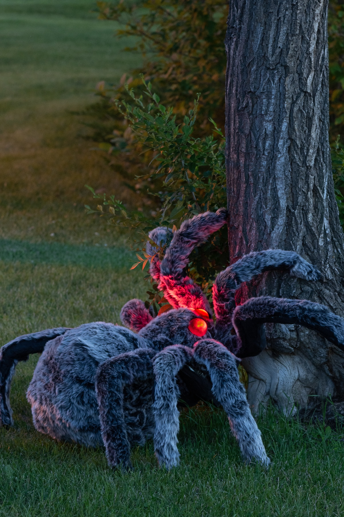 A giant halloween spider with furry legs and glowing red eyes starting to climb tree trunk during twlight.