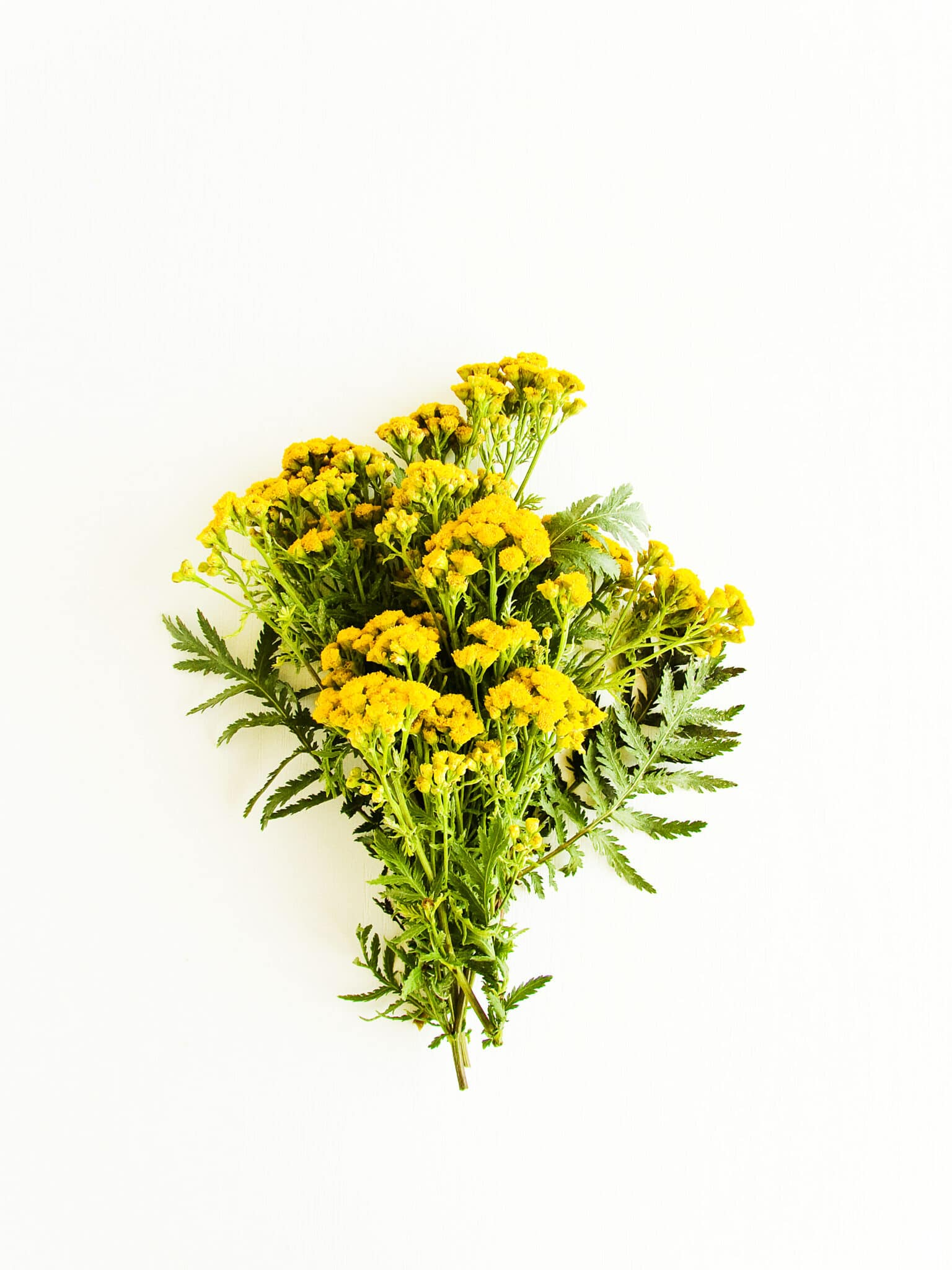 Bunched yarrow sprigs on a white background.