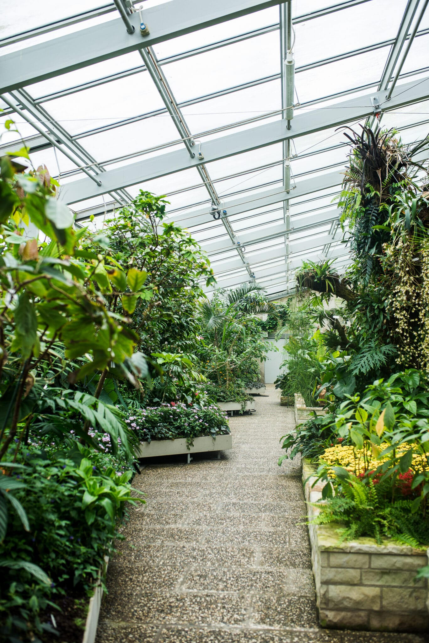 A lush indoor plant nursery where you can find the best plants to grow indoors.