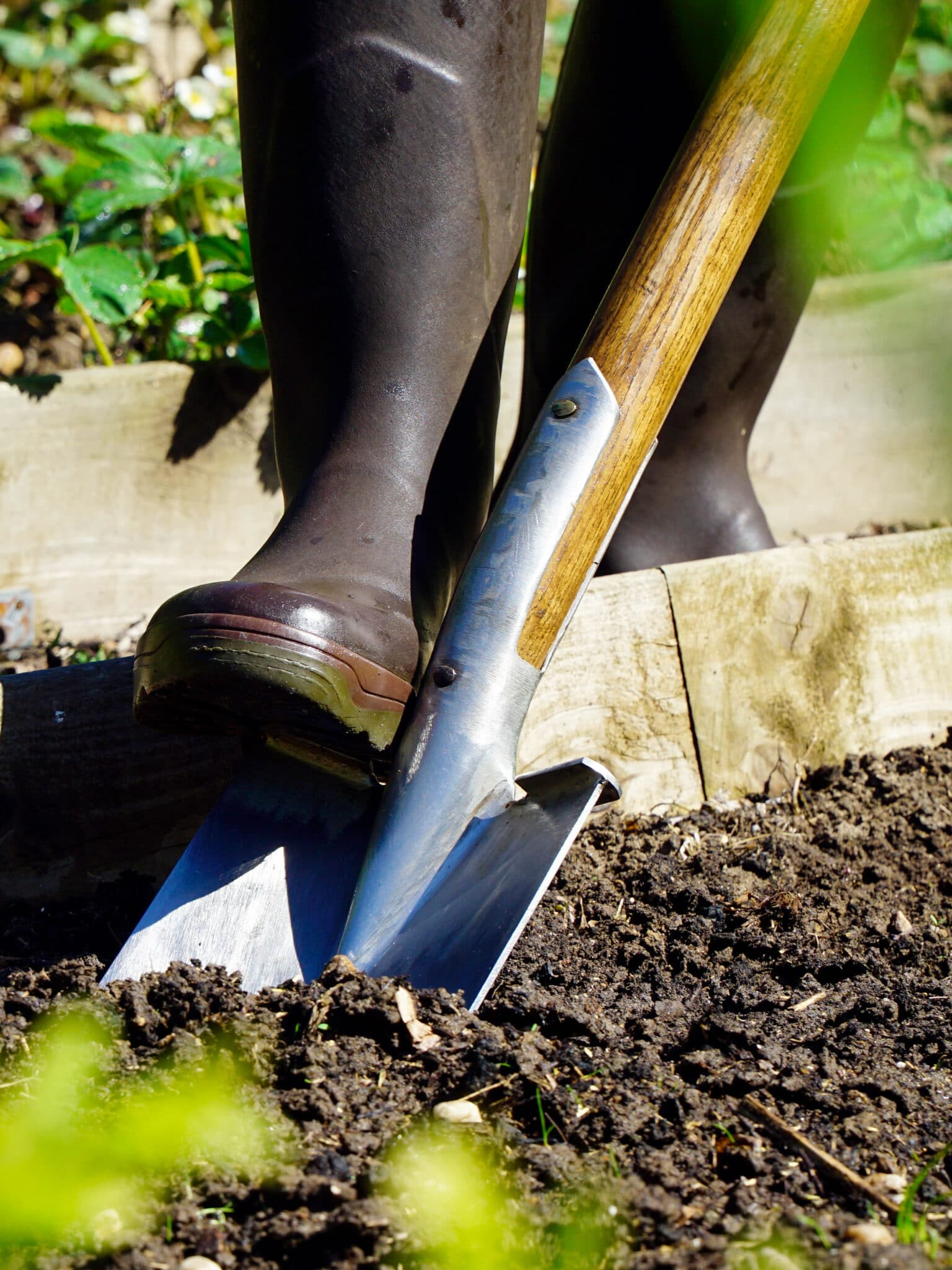 A shovel being pushed into the soil by a gardener's foot.