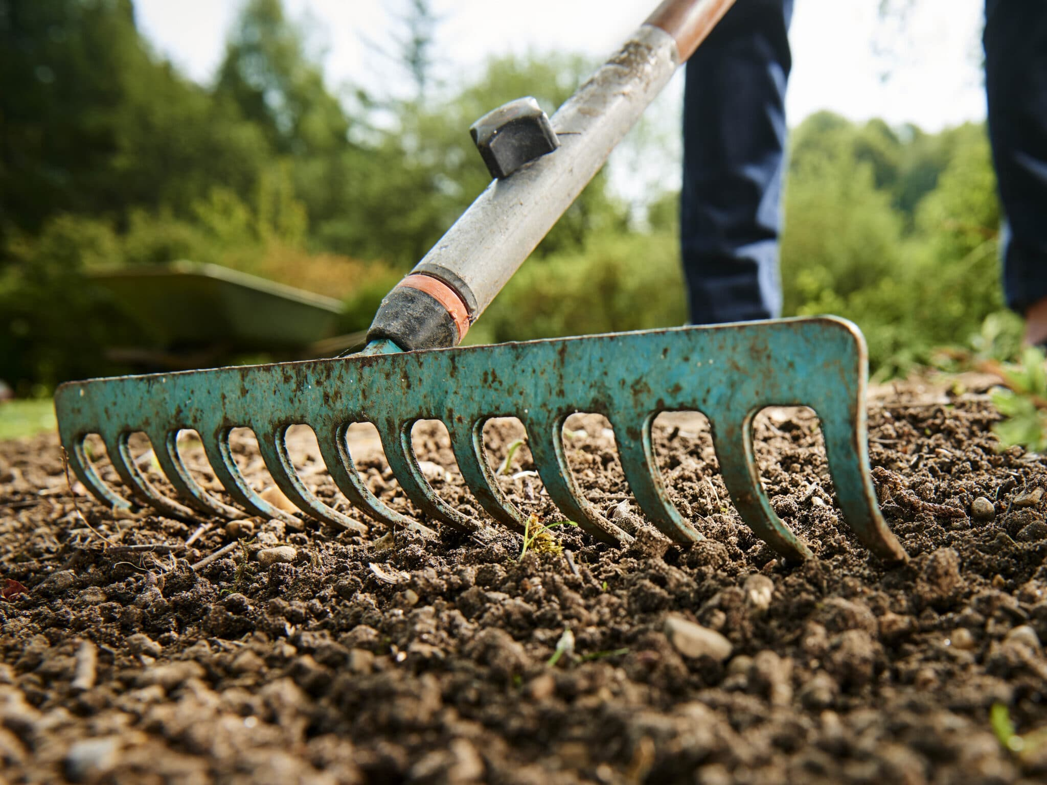 A garden rake being used to level loose soil.