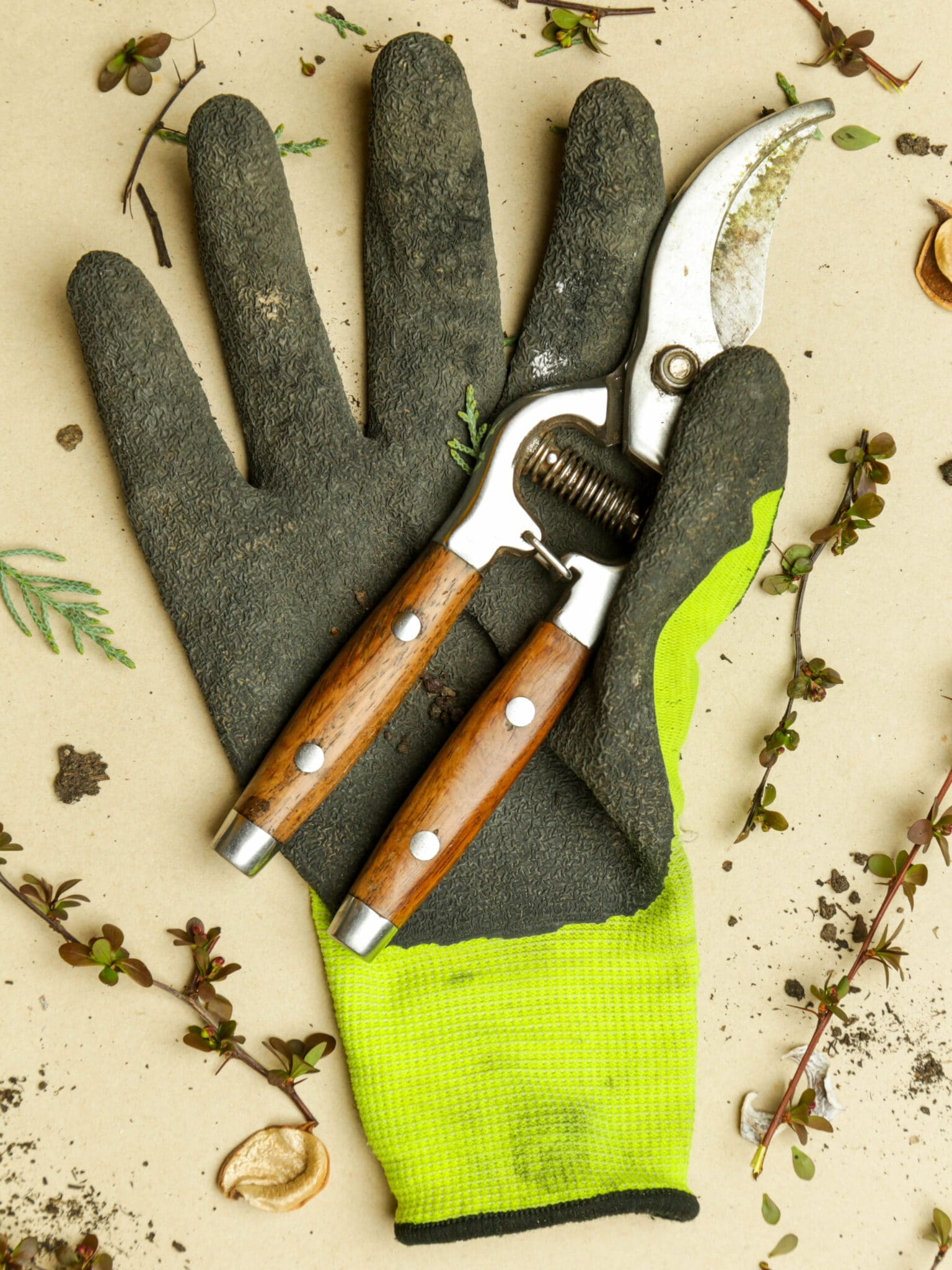 Latex-dipped green gardening gloves on a table with garden shears.