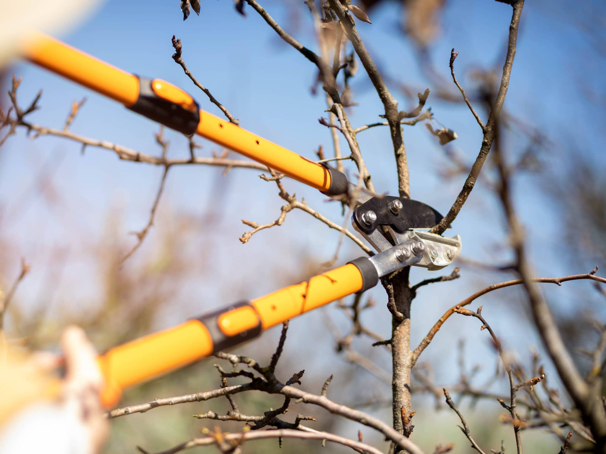 Extended pruning shears, or loppers, being used to cut a larger branch.