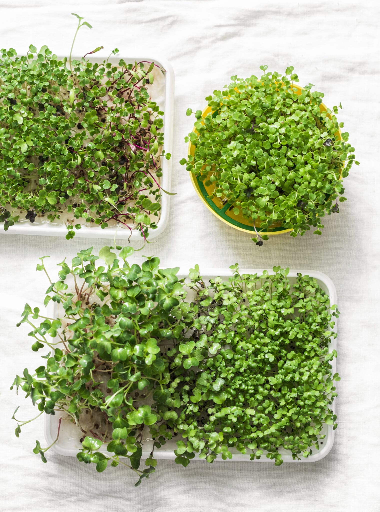 Homemade micro greens on a light background.