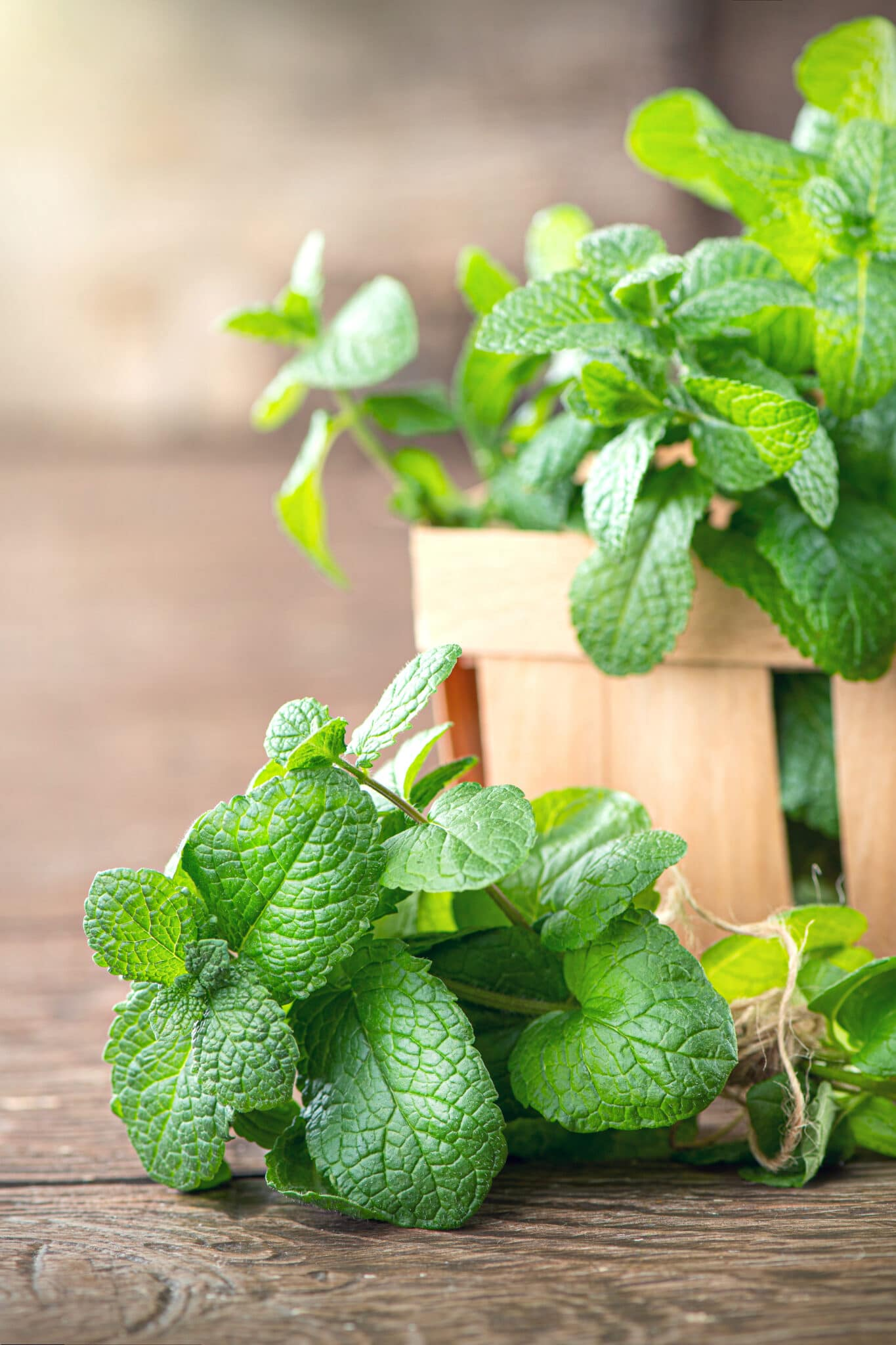Sprigs of mint tied with a rustic string resting on a wooden tabletop.  A small basket of mint in this background.