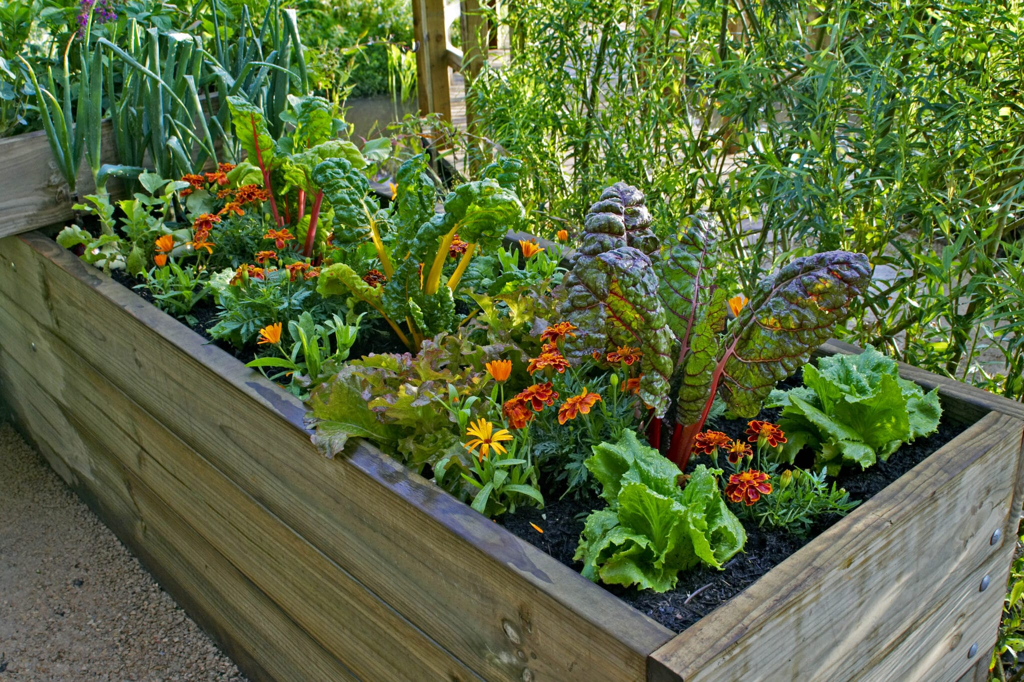 A small raised garden bed with a variety of different vegetables and flowers being used as companion plants.