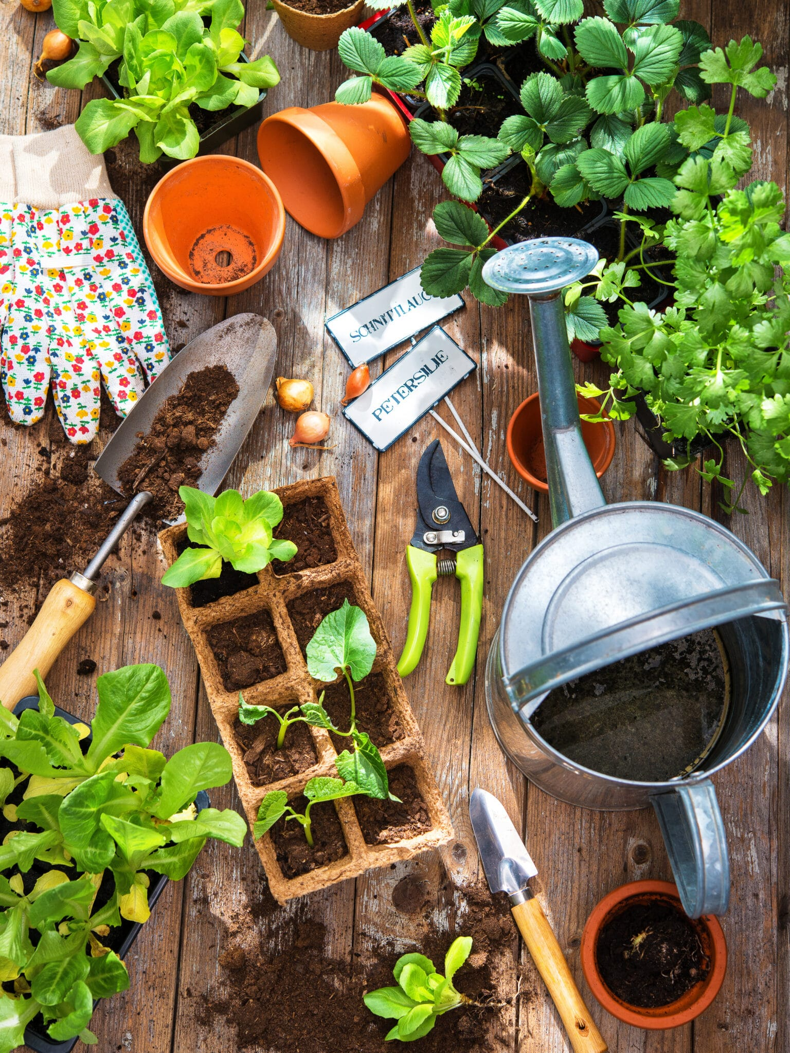 Tools and seedlings on a table ready for Spring gardening.