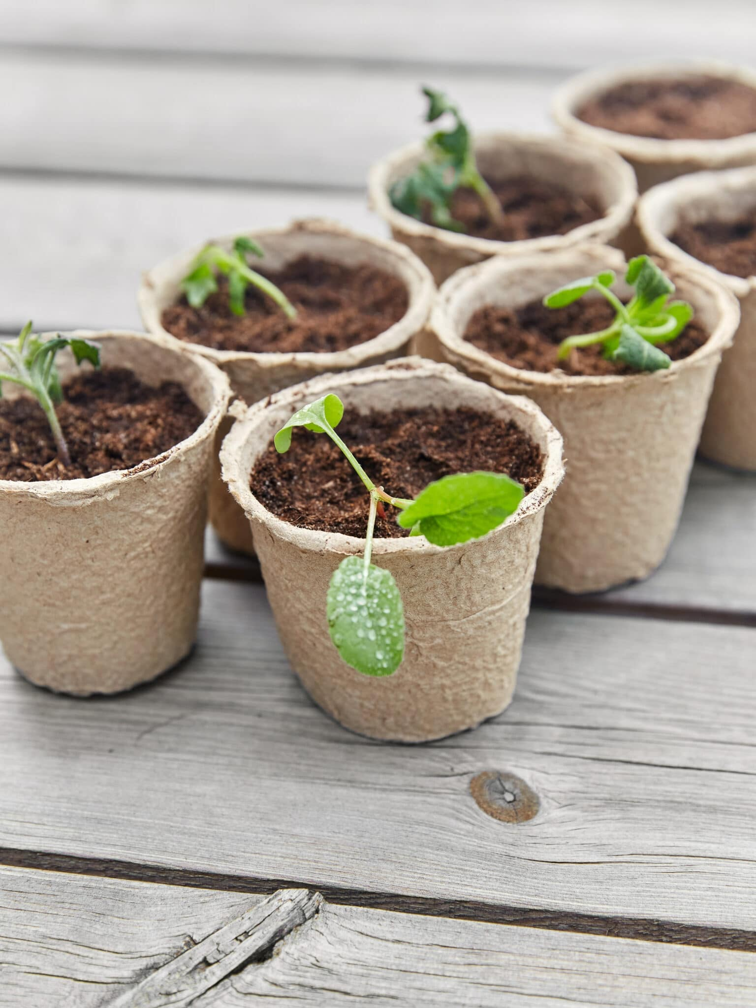 Vegetable seedlings growing indoors.