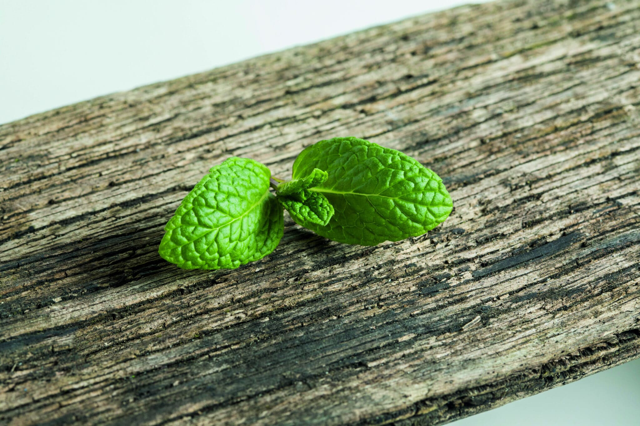 A closeup of peppermint sprig on a wooden table, showing a detailed view of these types of mint.