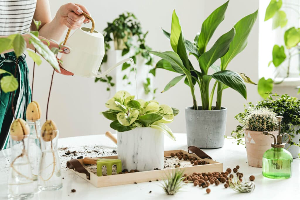 Potted plants and indoor gardening supplies on a white table.
