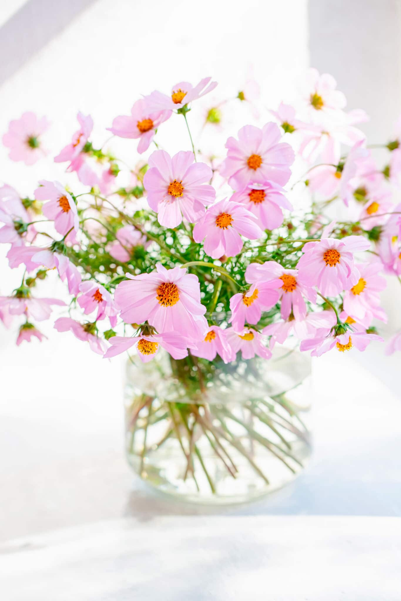 Bouquet of pink flowers. Cosmos flowers picked from the garden and placed in a clear glass vase.
