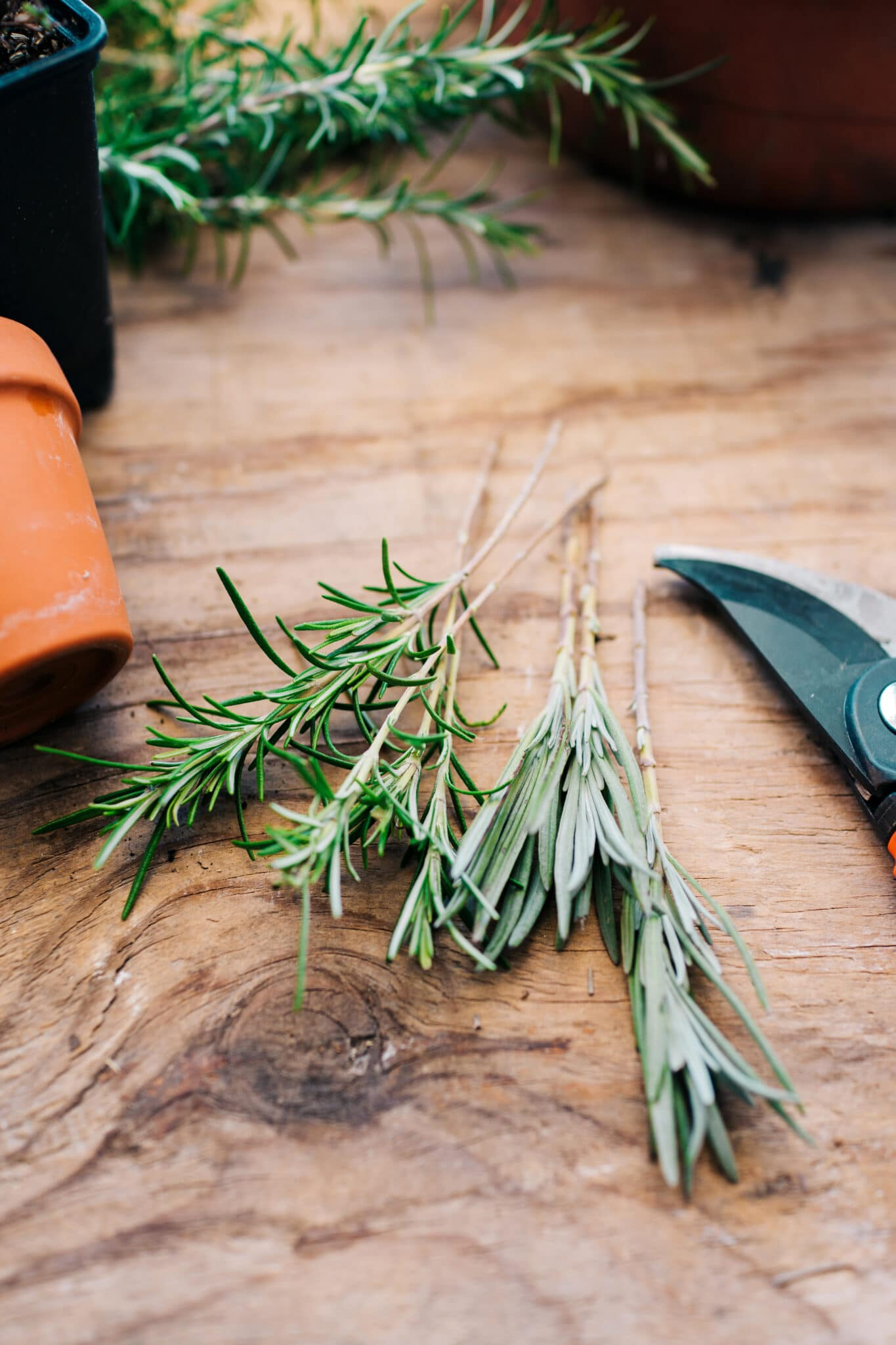 Lavender cuttings on a rustic wooden backdrop.