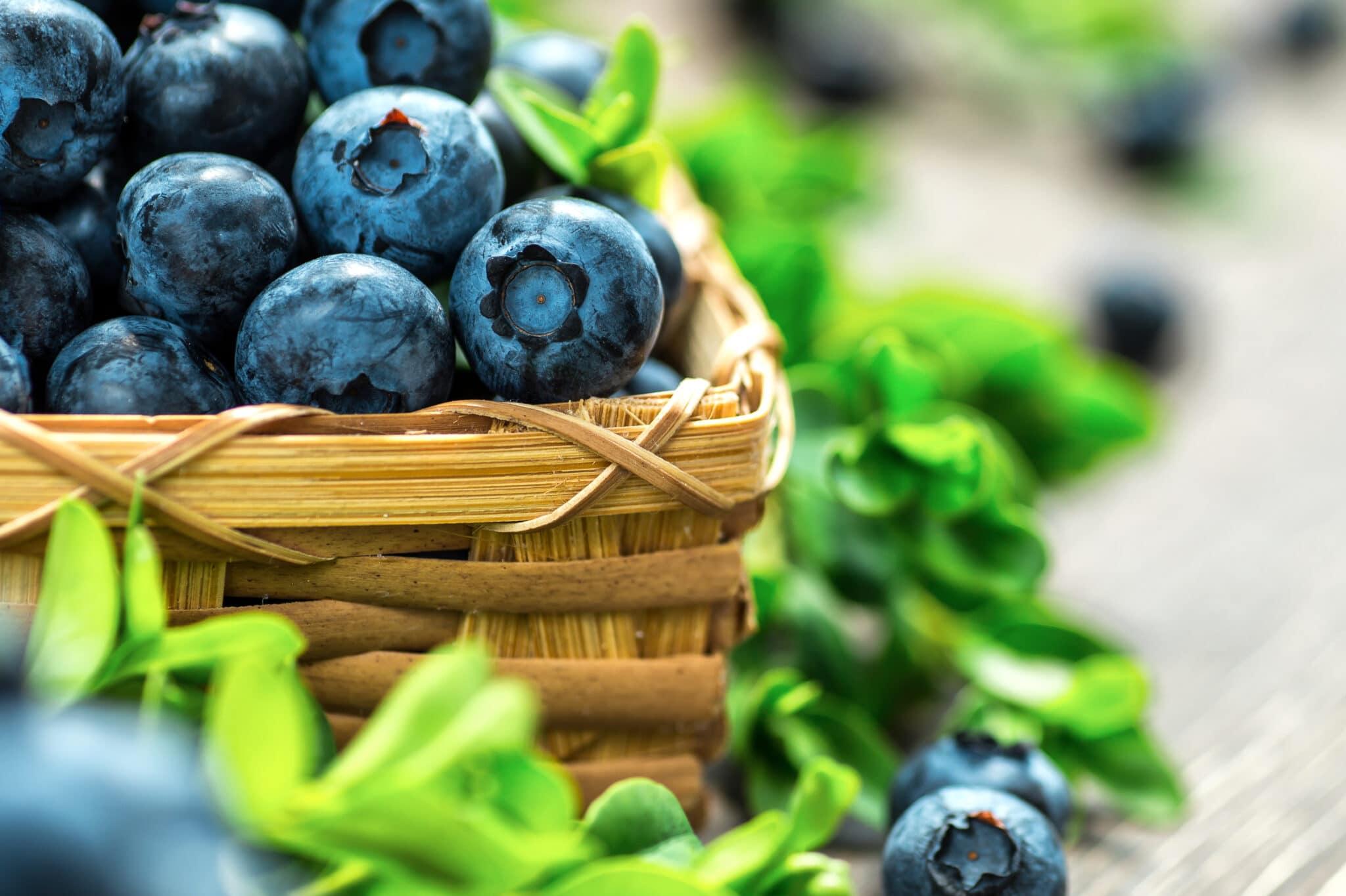 A basket of fresh ripe blueberries.