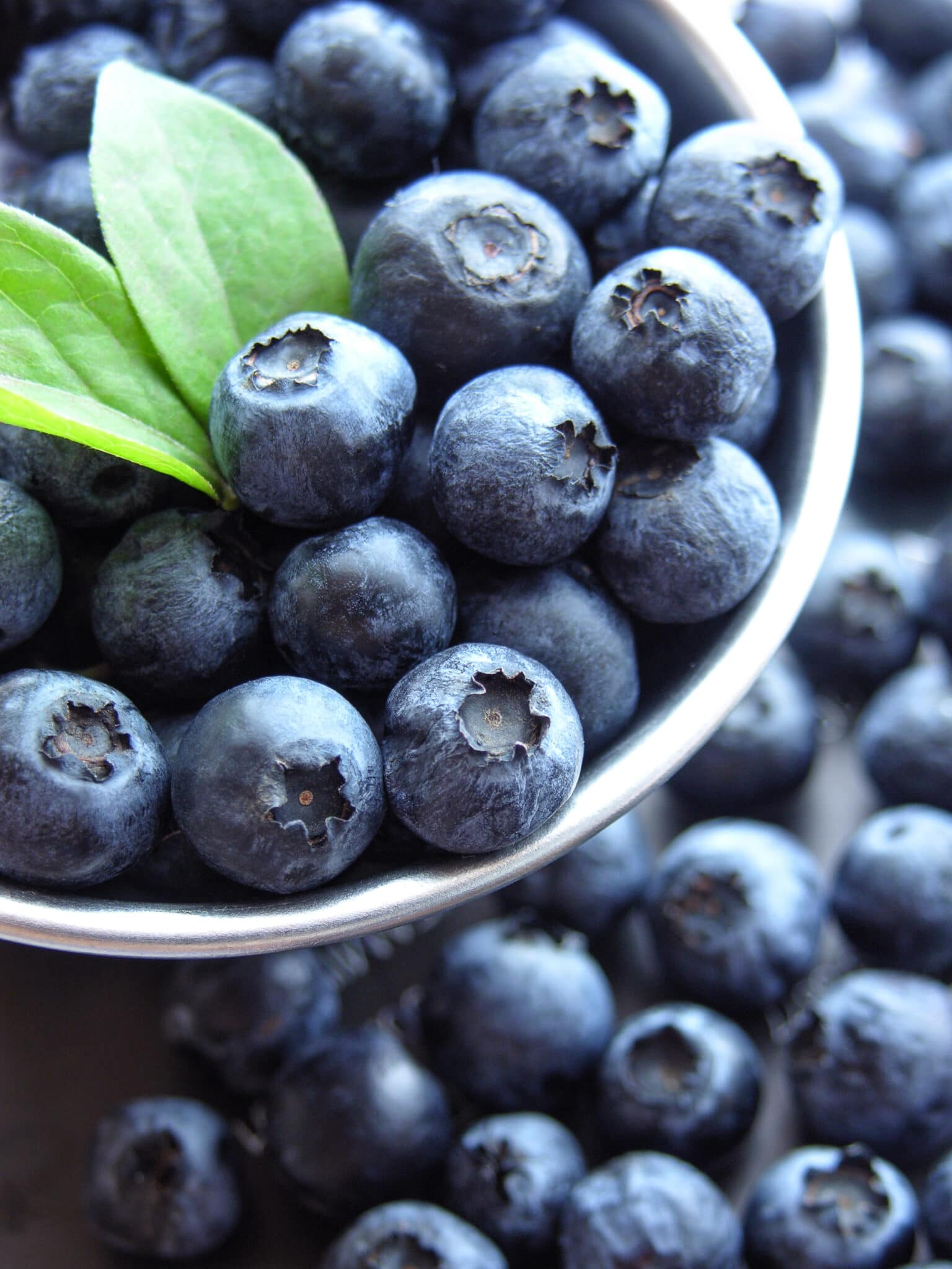 A pot filled with ripe freshly picked blueberries.