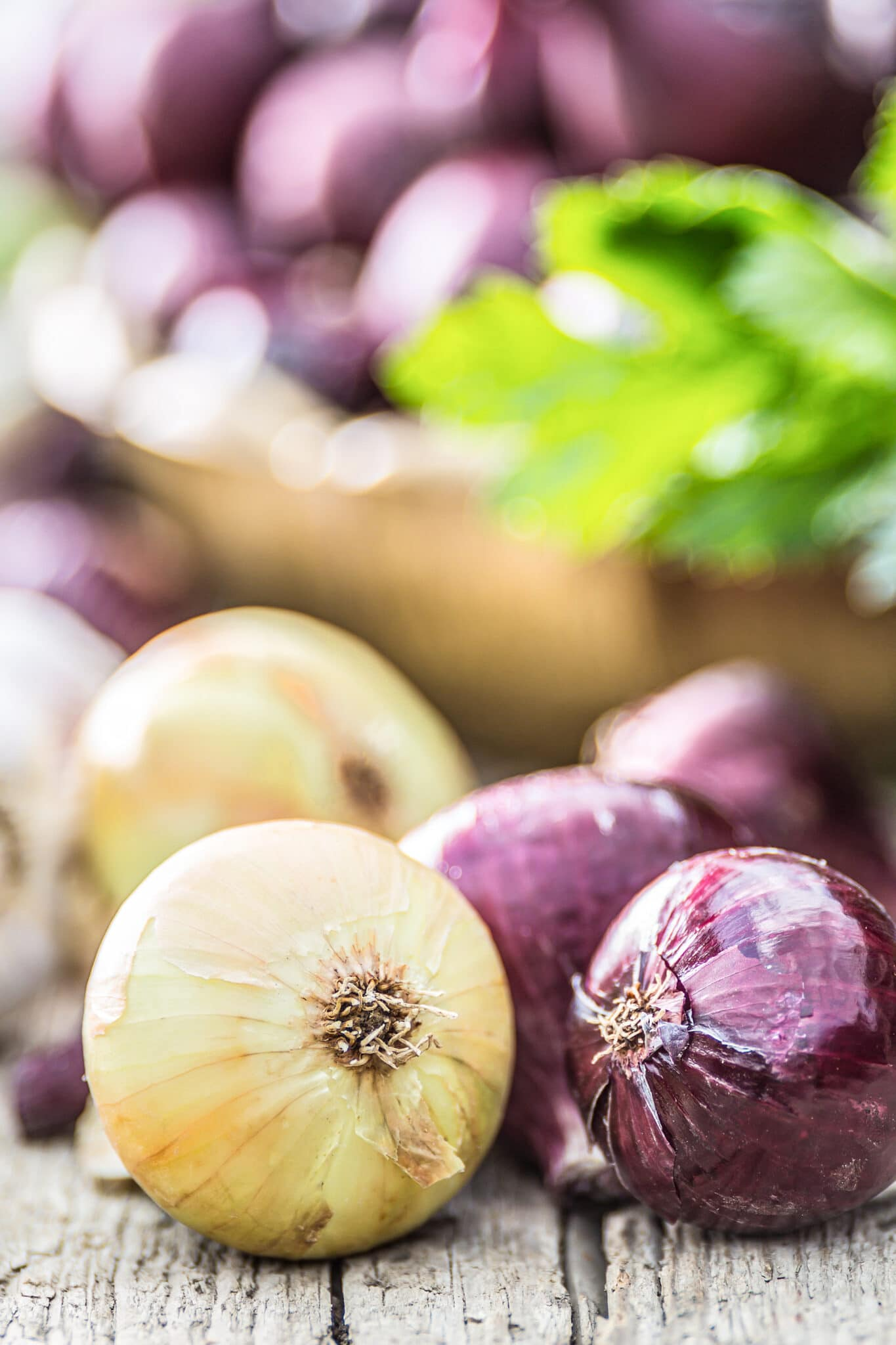 Different varieties of container grown onions on a rustic tabletop.