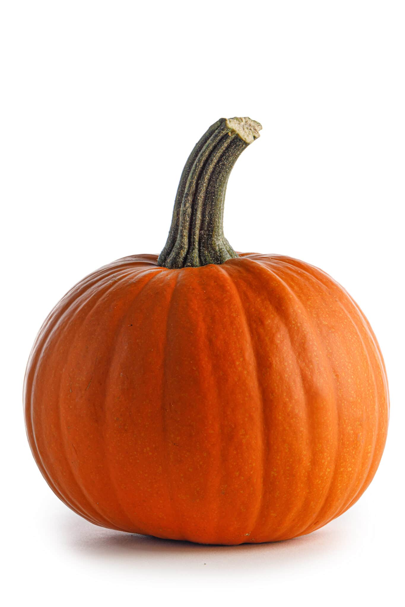 Small pie type pumpkin isolated against a white background.