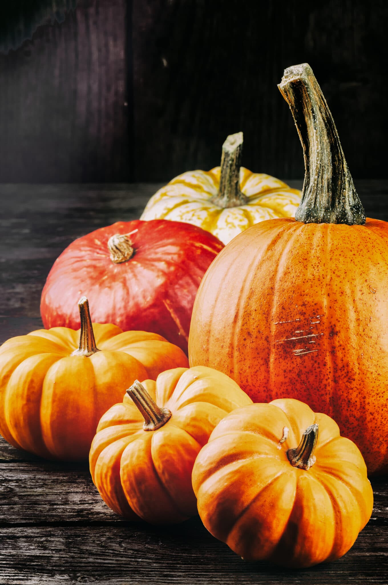 Fresh grown pumpkins (small and large) against a dark moody background.