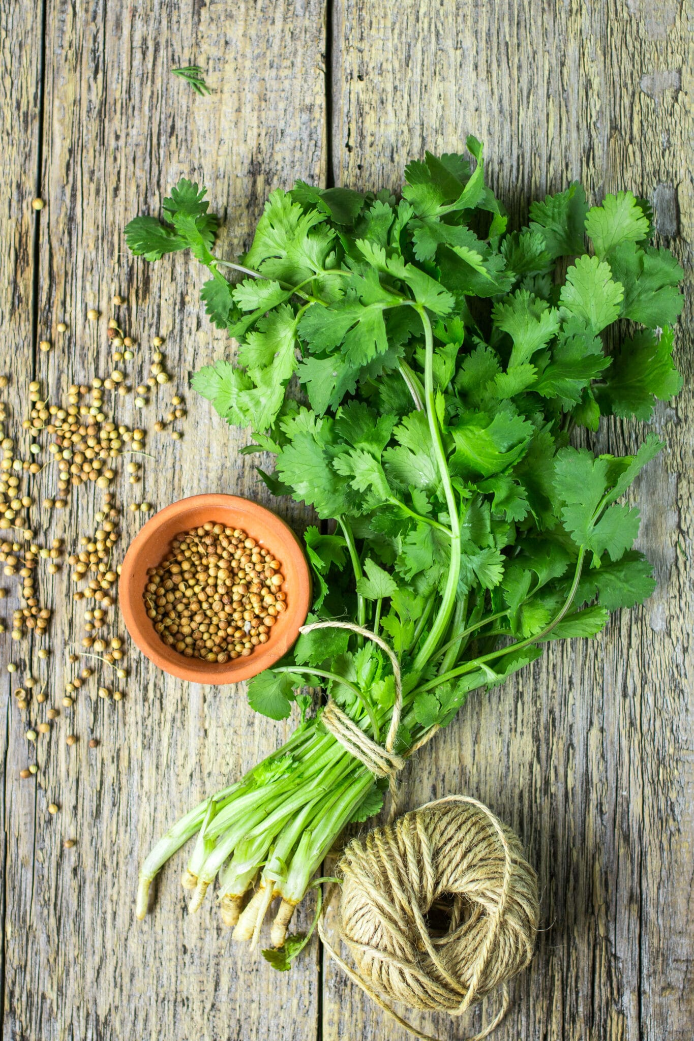 Cilantro leaves and coriander seeds on a wooden table.
