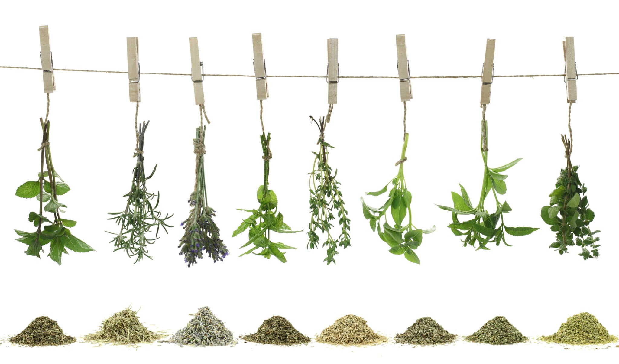 Fresh herbs drying on a rope with clothes pins with the dried herbs in piles below.