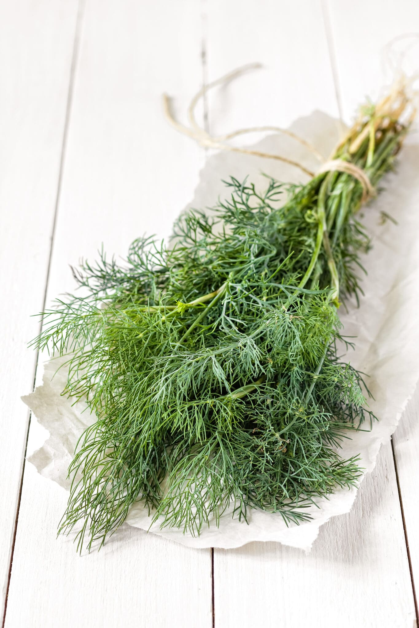 Freshly picked dill from a summer garden.