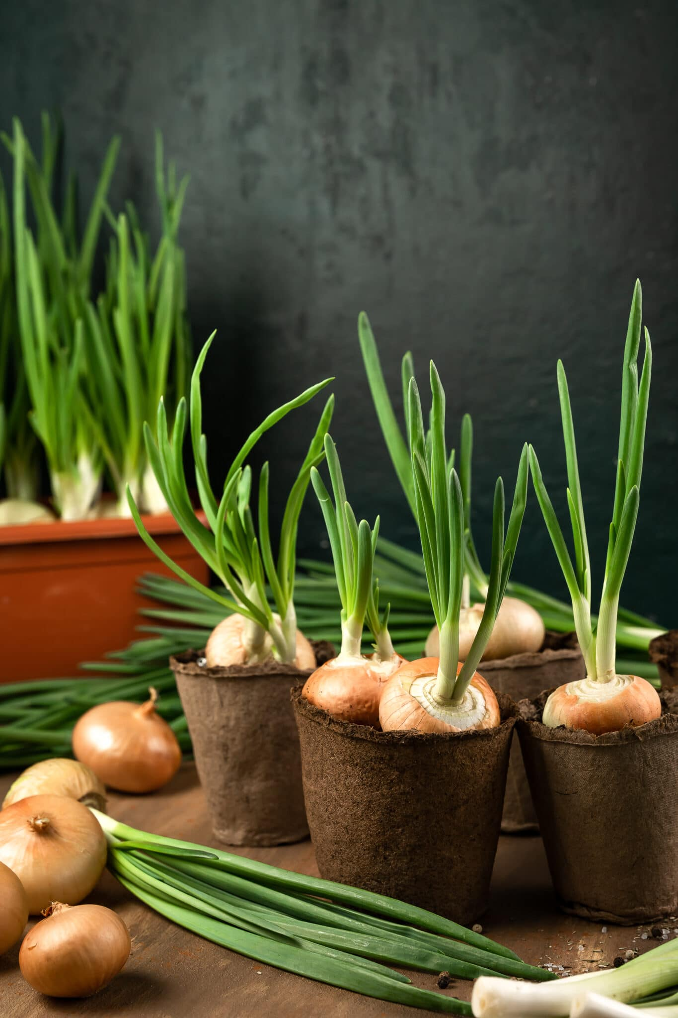 green onions grown in paper containers.